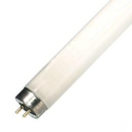 master tl-d super 80 fluorescenti lineari36wattacco g13k2700